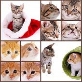 Cute kittens collage