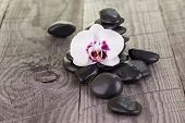 White Moth Orchid And Black Stones On Weathered Deck