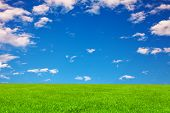 Field and blue sky as a background