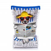 picture of newspaper  - dog reading newspaper on a beach chair with sunglasses and yellow hat isolated on white background - JPG