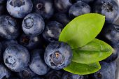 Macro View Group Fresh Blueberries With Leaf Background