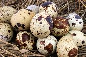pic of manger  - Background for Easter quail eggs in the manger - JPG