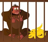 stock photo of gorilla  - Vector illustrated cartoon gorilla in a cage - JPG
