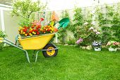 pic of wheelbarrow  - Wheelbarrow with Gardening tools in the garden - JPG
