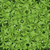 pic of green wall  - Vector illustration - JPG