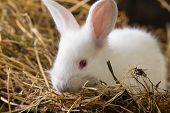 pic of rabbit hutch  - Little rabbit on Dry Grass  - JPG