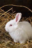 image of rabbit hutch  - Little rabbit on Dry Grass  - JPG