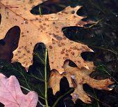 Leaf Float