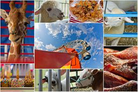 picture of carnival ride  - Attractions at summer carnival including animals rides and food in collage - JPG
