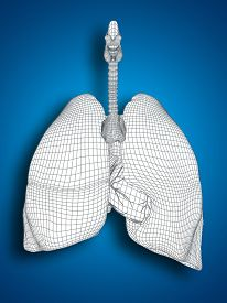 stock photo of respiratory  - Concept or conceptual anatomical human man 3D wireframe mesh respiratory system  with lungs on blue background - JPG