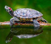 stock photo of sea-turtles  - Turtle - JPG