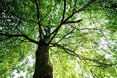 Green treetop