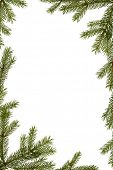 Christmas background - fir-tree branches frame isolated on white