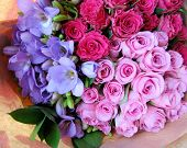 stock photo of blue rose  - photograph of a bouquet of pink lettuce roses - JPG