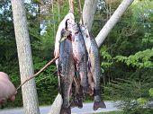 Days Catch Of Fish