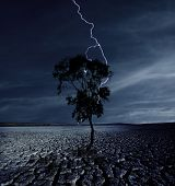 Cracked land and the lightning strikes on the single tree