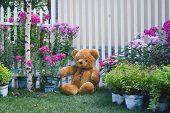 Teddy-Bear In The Garden