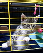 Kitten In Cage.