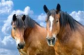 Two beautiful horses on the blue sky background