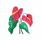 Anthurium Flower Illustration. Nature, Flora, Summer. Nature Plants Concept. Vector Illustration Can poster