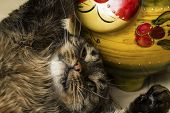 The Cat Lies On His Back Next To A Toy Cat. One Paw Cat Hugs Toy.  Selective Focus. poster