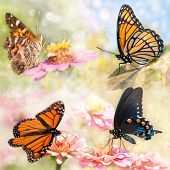 Dreamy collage of four beautiful butterflies - Monarch, Viceroy, Green Swallowtail and American pain