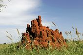 Termite Mound