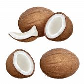Coconut Realistic. Tropical Closeup Nature Fruit From Fresh Palm Vector Coconut Milk Pictures. Palm  poster