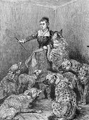 Trained wolf, dog, hyena and sheep. Engraving by Specht . Published in magazine