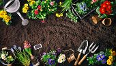 Planting spring flowers in the garden. Gardening tools and flowers on soil poster