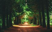 Walkway Lane Path With Green Trees In Forest. Beautiful Alley In Park. Pathway Way Through Dark Fore poster