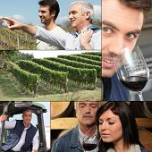 Collage of winemakers, wine and vineyards