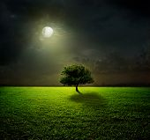 stock photo of tallgrass  - Night and the moon on a green field - JPG