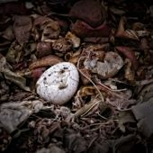 An Eggshell on a Compost Heap