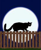 Gato em uma cerca