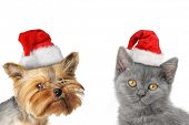 stock photo of yorkie  - Merry Christmas and Happy New Year - JPG