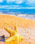foto of starlet  - Sea Starlet Five Beams - JPG
