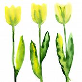 Floral watercolor paintings with tulips
