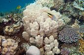 Coral reef is underwater in Red sea