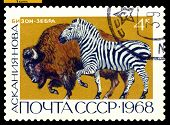 Vintage  Postage Stamp.  Bison And Zebra.