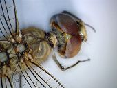 A Very Close up view of parts of a Dragonfly taken with a Digital Microscope. Some 5680 different sp