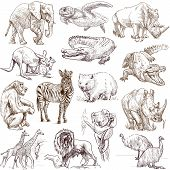stock photo of wombat  - An hand drawn collection in one big set  - JPG