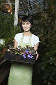 Portrait of young female botanist carrying crate full of flower plants at greenhouse