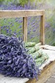 Pile Of Lavender Bouquets On A Wooden Bench