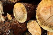 pile of sawed pine wood