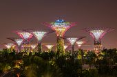 stock photo of singapore night  - Gardens by the Bay  - JPG