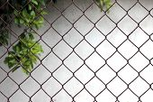 foto of chain link fence  - Chain link fence on white background with tree brunches - JPG