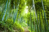 stock photo of bamboo leaves  - Road through the bamboo forest - JPG