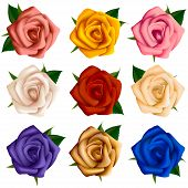 Set of roses of various colors