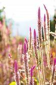 flowering grass plants